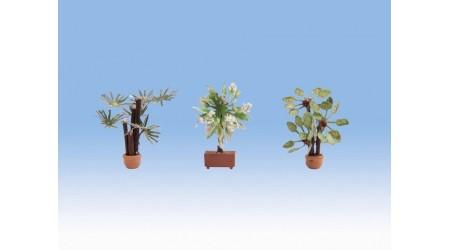 Noch 14023 Mediterrane Pflanzen
