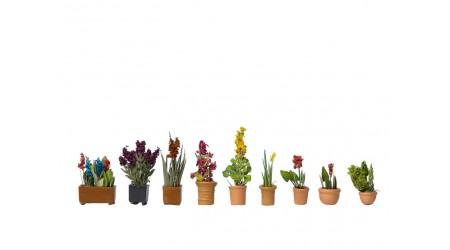 Noch 14012 Zierpflanzen in Blumentöpfen